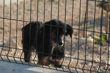 Dva mučna slučaja u Slavoniji: tip je pse zavezao za traktor i vukao, drugi je svog umlatio do smrti