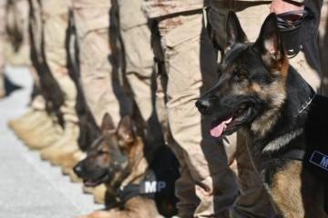 12 hrvatskih vojnika u Kabulu morali cijepiti protiv bjesnoće