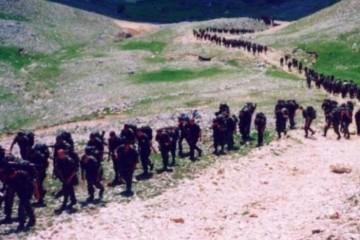 Na današnji dan 1994. započela operacija 'Cincar' (VIDEO)