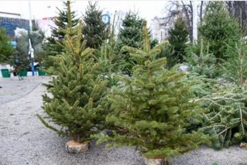 DOMAĆI PROIZVOĐAČI NA KOLJENIMA: Drvca su nekad izvozili, a sada im posao pati zbog uvezene robe iz Europe!