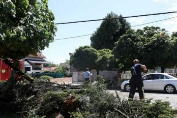 GLINA Gradonačelnik Ivan Janković: Najveći problem je urušavanje stabala na kontejnere i stupove