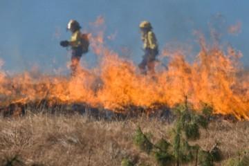INFERNO NA ZEMLJI, ITALIJA GORI: Požar odnio dva života, jednog muškarca vatra zarobila u kući. Temperature i dalje rekordno visoke