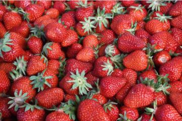 Uhićene tri osobe koje su kod Pitomače ukrale 100 kilograma jagoda
