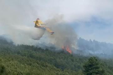 Požari u 2020: 16 posto manji broj, za petinu veća površina