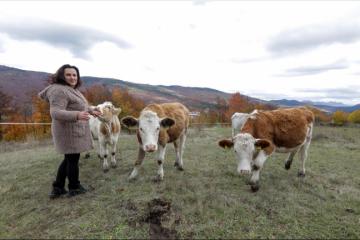 SRAMOTNE PRIJEVARE! Pod krinkom 'mlijeka hrvatskih farmi' prodaje se…pogledajte što…