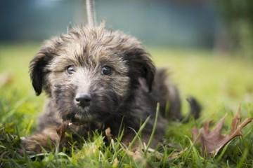 MONSTRUOZAN ČIN KOD KOPRIVNICE: Bezdušno vezao psa špagom i objesio o drvo. Šetač ga je našao prekasno
