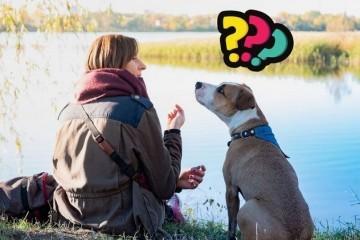 Novo istraživanje navodi da psi mogu prepoznati kad im ljudi lažu - pročitajte kako!