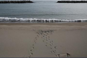 Stigle preporuke za kupanje u moru! Evo kako se ovog ljeta moramo ponašati na plažama…
