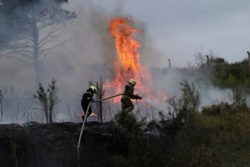 POŽAR BUKNUO NA SJEVERU JADRANA! Vatra prijeti kućama, vatrogasci su brzo stigli na teren