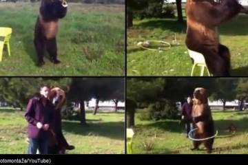 VIDEO Novi hit na internetu: Luđeg medvjeda od ovoga nema!